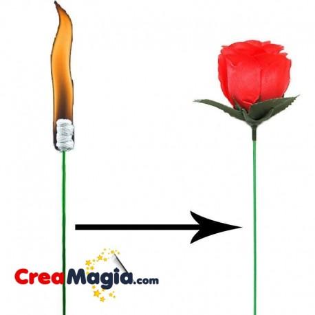 Flor antorcha